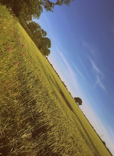 Nature in Summer EyeEm Selects Plant Sky Nature Tranquility Land Growth Beauty In Nature No People Day Field Landscape Tranquil Scene Outdoors Environment Scenics - Nature Low Angle View Grass Green Color Blue Tree
