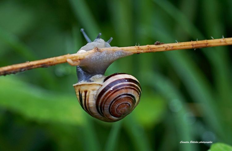 Snail One Animal Animal Themes Animals In The Wild Gastropod Animal Wildlife Spiral Wildlife Nature Close-up Animal Focus On Foreground Fragility Outdoors No People Day Beauty In Nature Eyeemphotography Schneckentempo EyeEm Nature Lover Schneckenhaus Photographylovers Macros Photography Nature