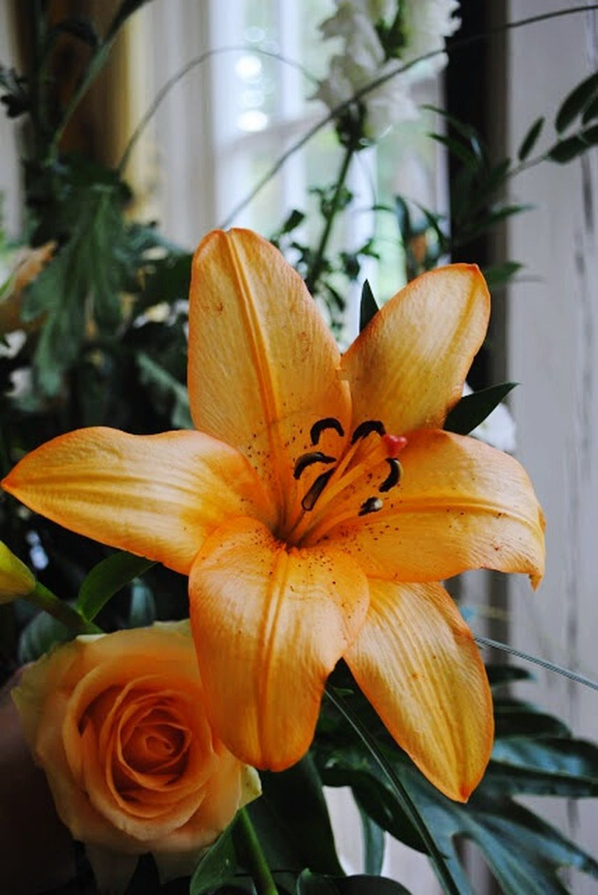flower, petal, growth, plant, flower head, day, close-up, day lily, no people, beauty in nature, nature, focus on foreground, fragility, freshness, outdoors, blooming