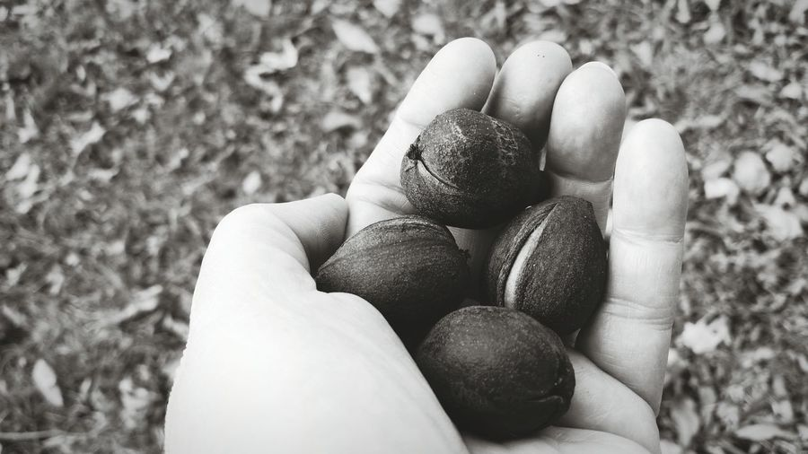 The Premium Collection EyeEm Selects High Angle View Day Outdoors Close-up Focus On Foreground One Person Nature People Holding Hand Human Body Part Nuts Hickory Nut Autumn Black And White The EyeEm Collection Black And White Friday