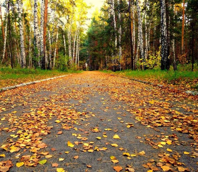 Leaf Autumn Change Season  Tree Leaves Dry Forest Fallen Scenics Tranquil Scene Fallen Leaf Tranquility Beauty In Nature Nature Yellow Falling Surface Level Non-urban Scene Maple Leaf
