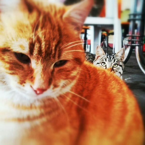 Gidişler hep mi hüzünlüdür Gezgez Kedicik Kediseverler Cat Eyes Cats Kedidir Kedi Kedi Aşkı Cat Lovers KediKediler Pet Portraits