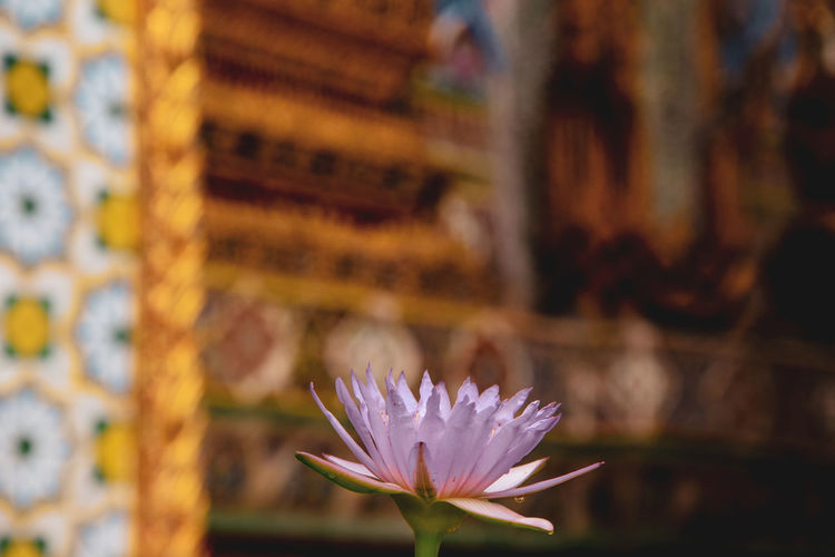 bangkok temple Flower Flowering Plant Freshness Vulnerability  Fragility Plant Petal Beauty In Nature Close-up Inflorescence Focus On Foreground Flower Head Growth No People Nature Day Outdoors Pink Color Wood - Material Pollen Bangkok Temple EyeEm Best Shots EyeEm Nature Lover EyeEm Gallery