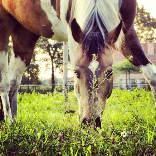 Horse <3 Horses