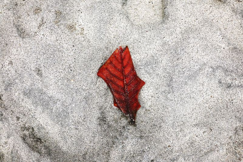 Colorful Leaves Sand Colors Red Beach White Sand Beach Bali TakeoverContrast
