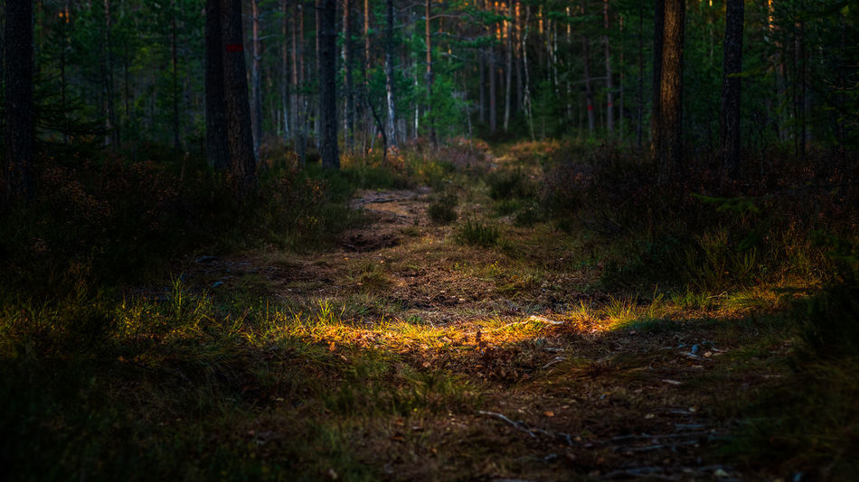 Light ray crossing a path in the forest. Forest WoodLand No People Tranquility Nature Outdoors Landscape Non-urban Scene Beauty In Nature Tranquil Scene Forestwalk Sunray Contrast Scenics - Nature Scenic Day EyeEmNewHere