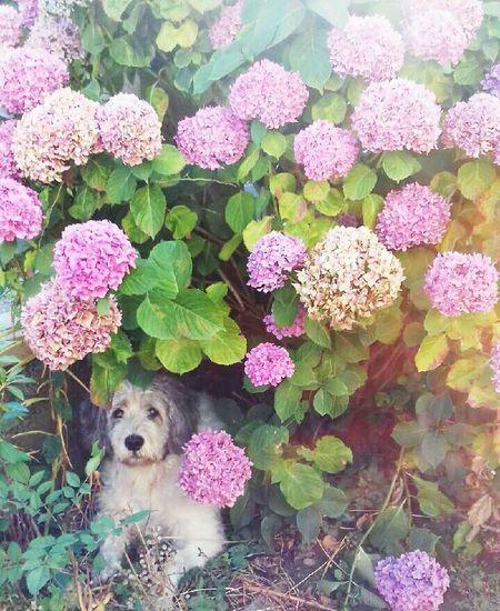Flower Fleurs