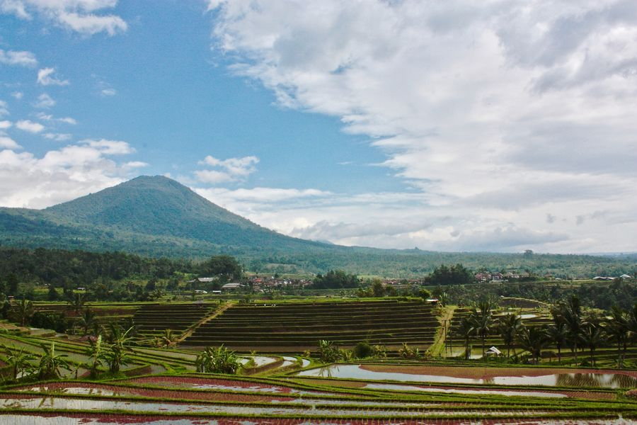 EyeEm Nature Lover Eyeem Bali Jatiluwih Rice Terrace Agriculture Baliphotography Beauty In Nature Day Field Growth Landscape Mountain Mountain Range Nature No People Outdoors Rice Terraces Scenics Tranquility