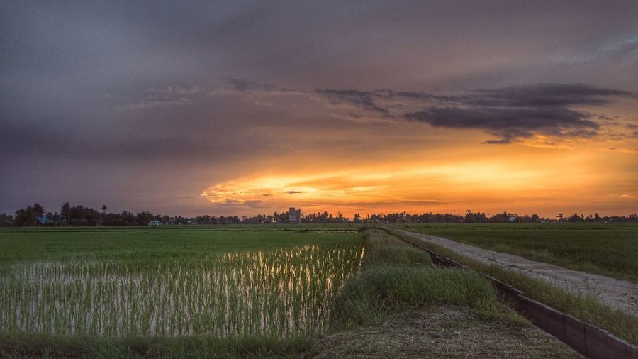 Cereal Plant Rural Scene Sunset Water Agriculture Field Rice Paddy Crop