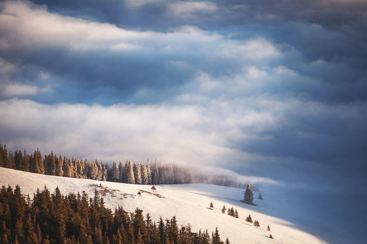 Panoramic shot of trees on snowcapped landscape against sky