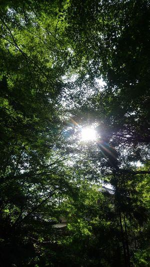 今日は大原へ🚗Water Nature Reflection Outdoors No People Day Green Color Beauty In Nature Tree Tranquility Sunlight Growth Grass Ohara Kyoto Driving 京都 大原