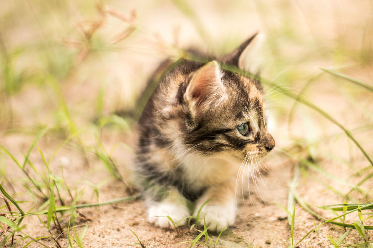 High angle view of kitten on field