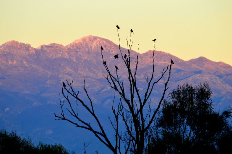 Silhouette of bare tree against mountain range