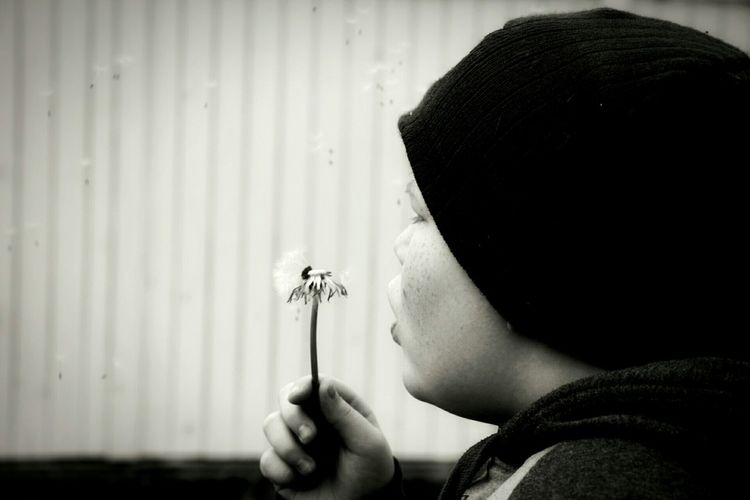 Close-up of boy blowing flower