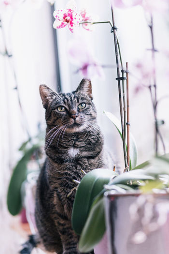 Close-up of cat against plants