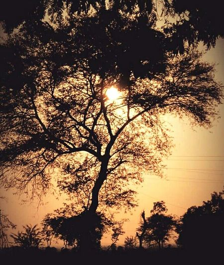 Sun Shine Nature's Beauty!! Cordination Of Up Nd Down!!