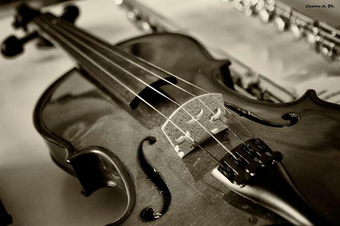 Violin Violin <3 Violino Violine  Violins Music Musica Musica Clasica Music <3 Music Is My Life
