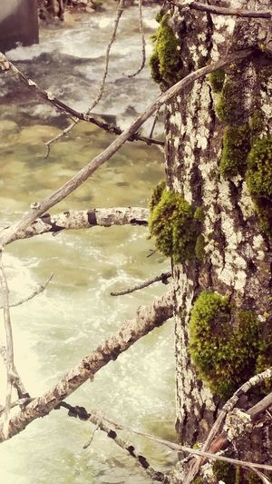 Nature Moss Mossy Tree River Dunsmuir Beautiful Nature First Eyeem Photo Naturelovers Nature_collection