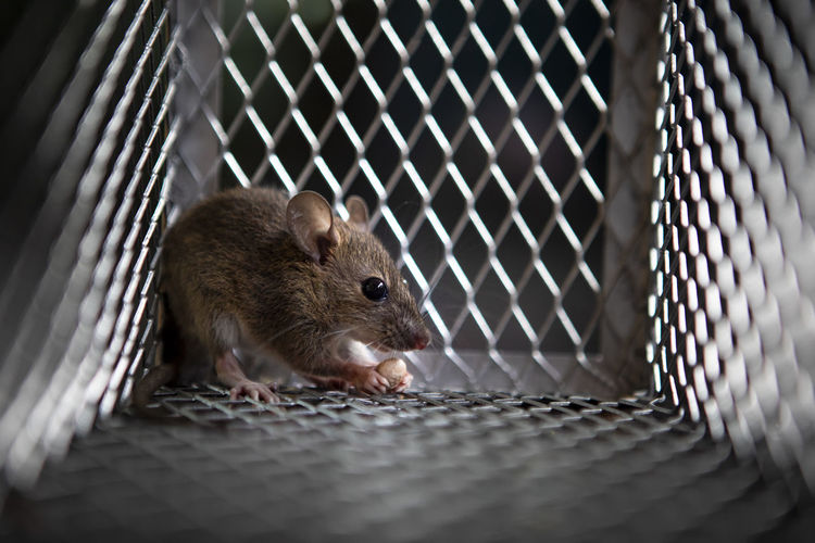 Close-up of mouse in cage