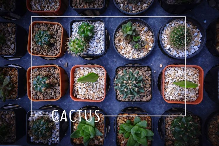 High angle view of plants in row