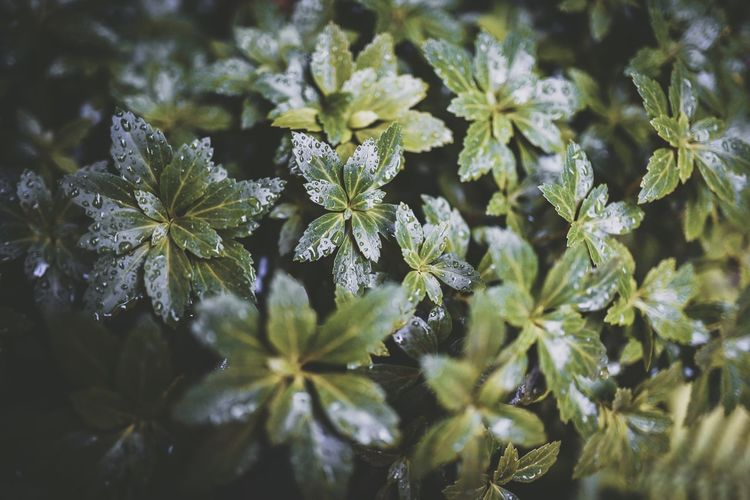 Leaf Nature Plant Growth Beauty In Nature Fragility Green Color Flower No People Close-up Freshness Day Outdoors Herb Flower Head Raindrops The Week On Eyem EyeEm Best Edits EyeEm Gallery Poznań EyeEm Selects Poland