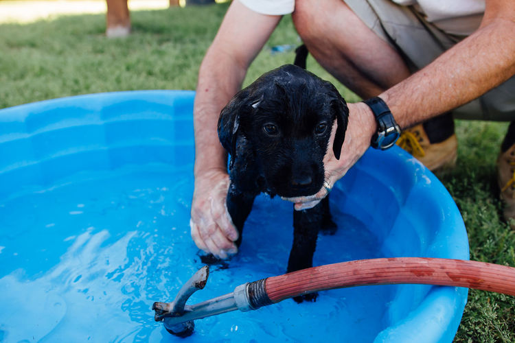 Man giving bath to black labrador puppy in tub