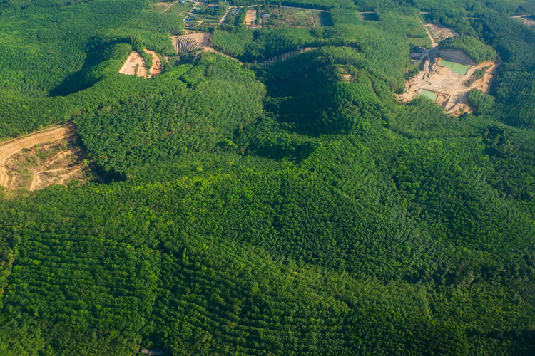 aerial view of forest Aerial View Agriculture Beauty In Nature Crop  Day Deforest Deforestation Environment Farm Field Green Color Growth Land Landscape Nature No People Outdoors Plant Plantation Rolling Landscape Rural Scene Scenics - Nature Tranquil Scene Tranquility Tree