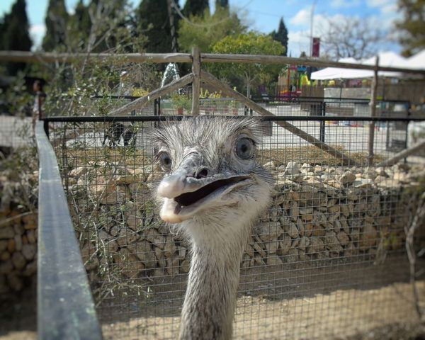 One Animal Animal Themes Animal Head  Bird Close-up Nature No People Day Ostrich