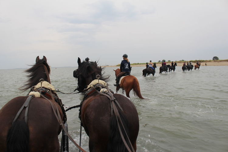 People riding horses in the sea