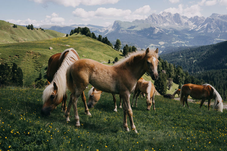 Horses in a field and in the mountains