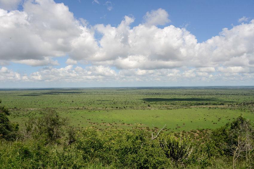 Safari in Kruger National Park, South Africa Kruger Park South Africa Wildlife & Nature Beauty In Nature Kruger Krugernationalpark Krugerpark Landscape Nature Outdoors Rhino Rhinoceros Safari