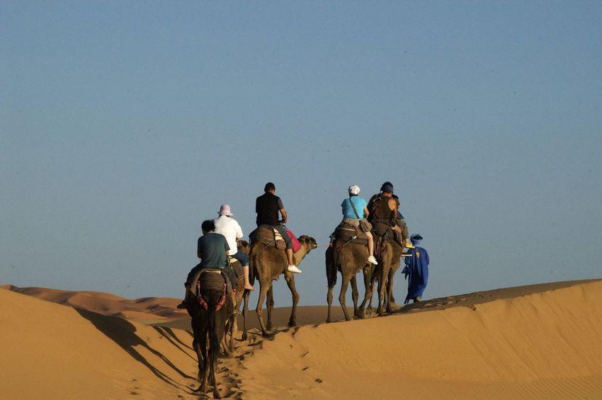 Camel trip into the Sahara desert in Merzouga, Morocco. Desert Morocco MoroccoTrip Sahara Desert Arid Climate Camel Camel Riding Camel Trip Clear Sky Desert Group Of People Landscape Merzouga Outdoors Riding Sahara Sand Sand Dune Working Animal