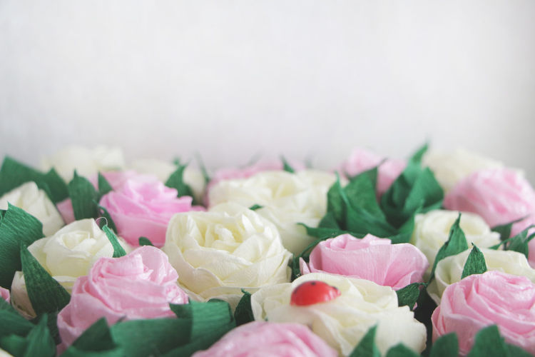 Beauty Of Nature Close-up Day Flower For Desi Fragility Freshness Green Grass Ladybird Ladybird On Flower Light Background Macro No People Paper Rose Papre Flower Pink Rose Red Ladybir Rosé Tenderness White Background White Roses