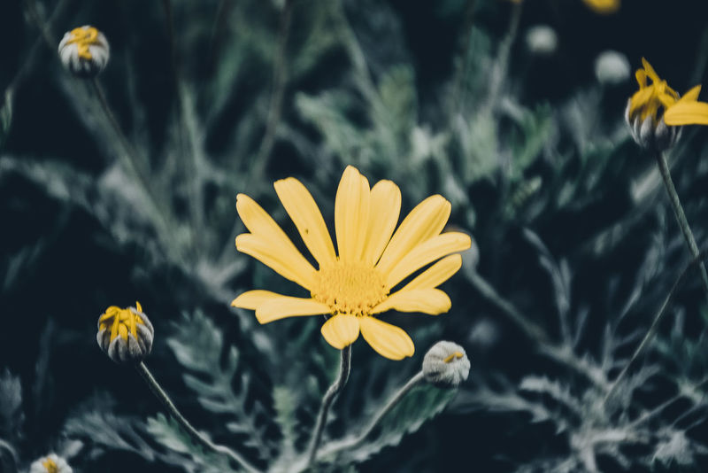 Beauty In Nature Beauty In Nature Blooming Close-up Cosmos Flower Crocus Daffodil Day Flower Flower Head Flowers Fragility Freshness Growth Marigold Nature No People Outdoors Petal Plant Pollen Roses Sprig Sunflower Yellow