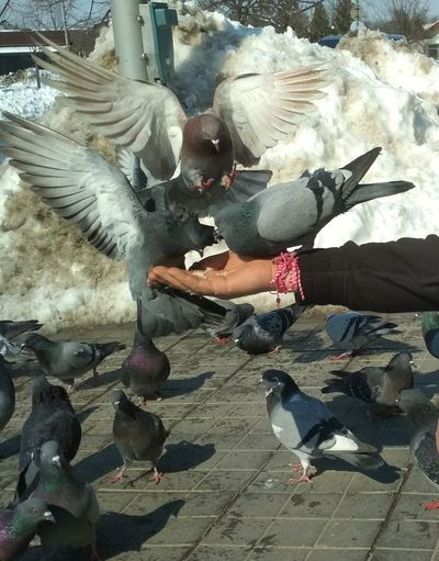 Dove Doves Doves, Birds Dove Love Dove In The City Dove Of Peace Hand Handyphoto Streetphotography Streetphotography Street Photography Real People One Person Men People