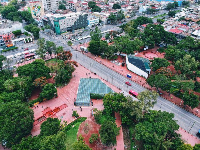 Ciudad Avenida Jalisco Guadalajara High Angle View Plant Day Growth Nature No People Full Frame Green Color Tree City