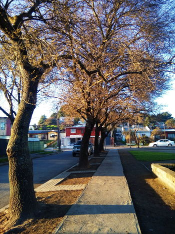 🍃 Photo Of The Day Otoño Concepción Chile