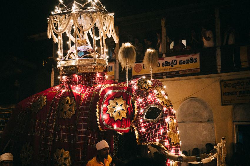 Travel in Sri Lanka Adventure ASIA Celebration Ceremony Elephant Enjoying Life Exciting Exploration Explore Hanging Illuminated Indoors  Night No People Perahera Retail  South Asia Sri Lanka Sri Lankan Travel Travel Destinations Travel Photography Traveling The Photojournalist - 2017 EyeEm Awards