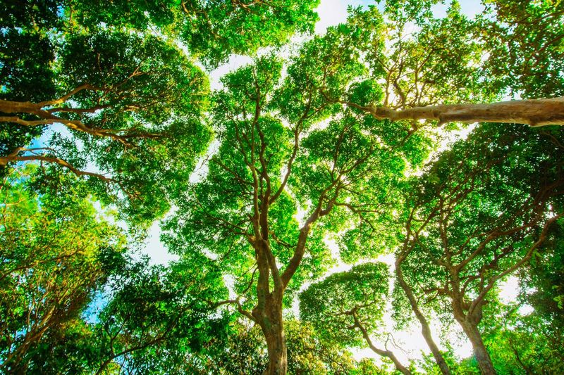 Tropical jungle tree at Koh Lanta Krabi Thailand Tree Nature Green Color Growth Forest Low Angle View Beauty In Nature Branch No People Day Outdoors Tranquility Tree Trunk Scenics Leaf