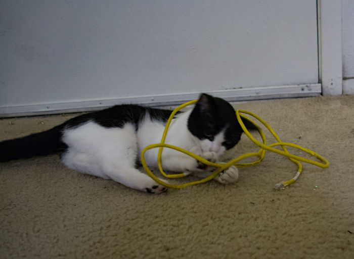 Black and white cat playing with an Ethernet cable. Animal Themes Communication Breakdown Domestic Cat Network Cable Pets Technical Difficulties Technology Troubleshooting Modern Workplace Culture