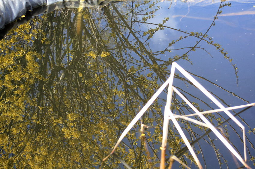 Beauty In Nature Daytime Forsythia Nature No People Outdoors Pond Reflections Sky Water Reflections
