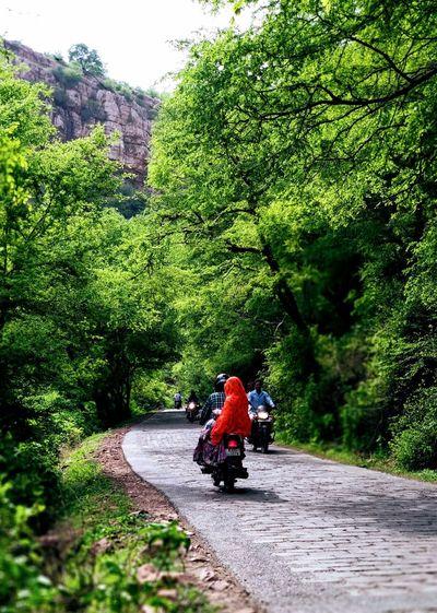 Tree Men Road Plant Green Color