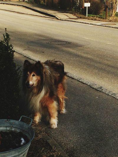 Hello World Mein Hund Fussel Wie Der Hund Guckt *-* Winter Collie Fussel