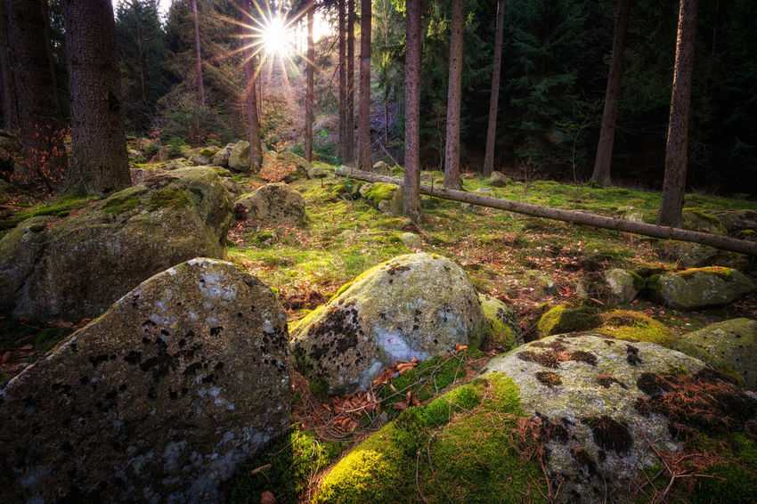 Auch im tiefen dunklen Wald scheint mal die Sonne Beauty In Nature Forest Harz Harzmountains Land Lens Flare Moss Nature No People Outdoors Plant Rock Rock - Object Scenics - Nature Solid Stream - Flowing Water Sun Sunbeam Tranquil Scene Tranquility Tree Tree Trunk Water WoodLand