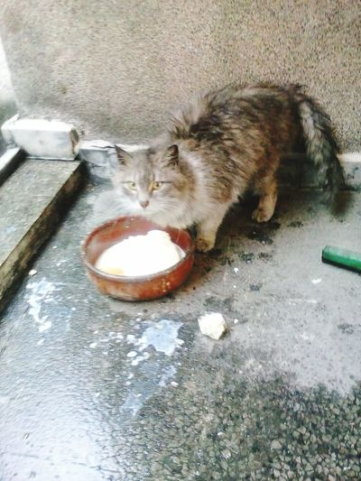 Cat♡ Duman