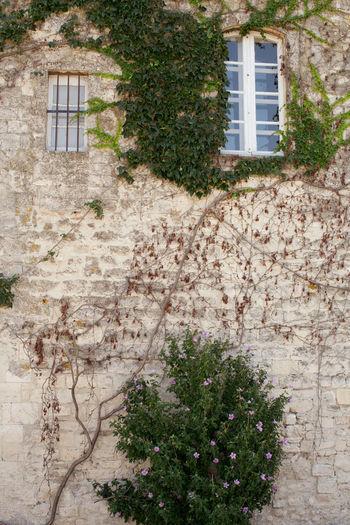 Flowers growing on window