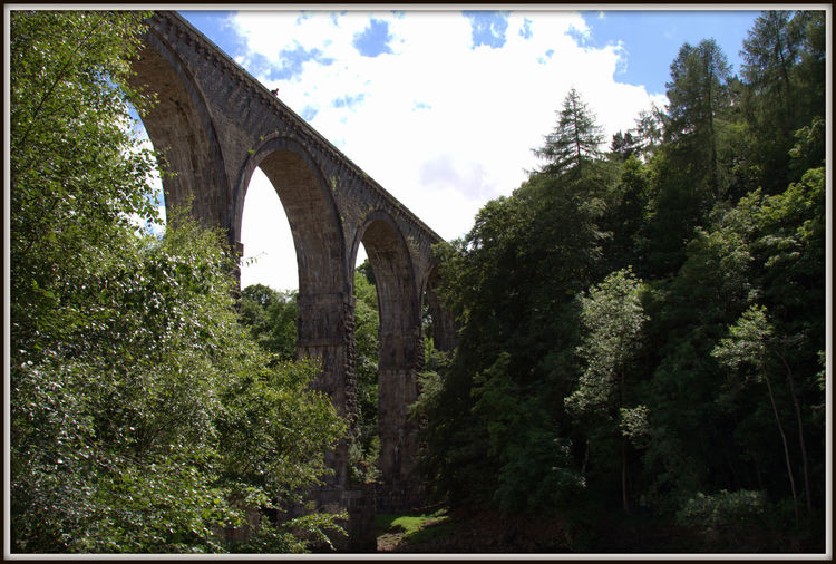 Lambley Viaduct Lambley Viaduct Arch Architecture Bridge - Man Made Structure Built Structure Connection Day Forest Growth Low Angle View Nature No People Outdoors Sky Transportation Tree