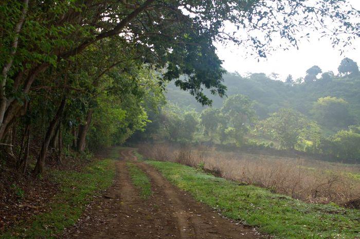 Tree Nature Landscape Road Scenics Rural Scene Less Edit Juxt Photography Tree