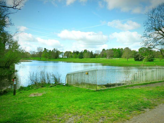 Taken by me on my Nikon S3200 today. Spring Nature Trees Lake LydiardPark Swindon Wiltshire Uk Europe 2016
