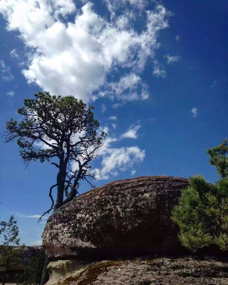 Tree Sky Tranquil Scene Nature Landscape No People Beauty In Nature Naturaleza Turismo Cloud - Sky Mountain Travelling Durango Mexico Bosque Sierra Stone Tranquility Day Low Angle View Lone Growth Outdoors Blue Scenics Branch